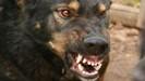 ВПрокопьевске полицейский застрелил агрессивную собаку