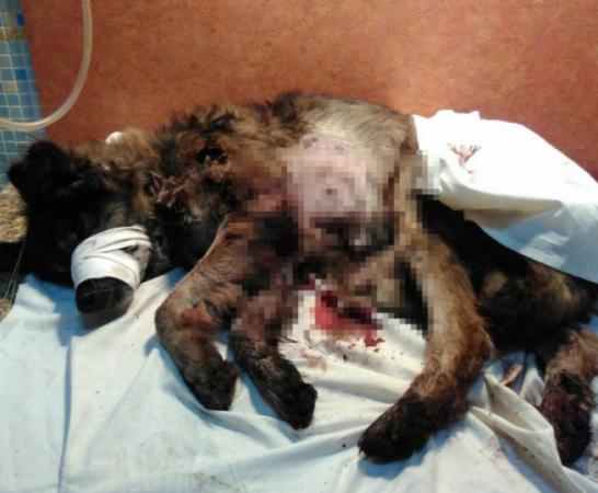 Неизвестный прокопчанин расстрелял наулице собаку