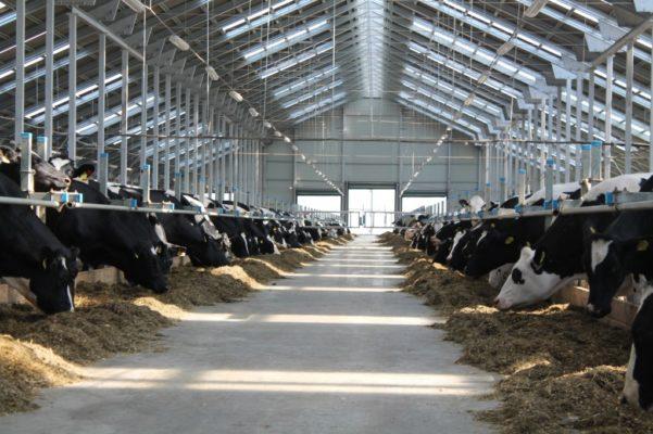 ВКузбассе впервый раз с2006 года вдвое вырастет субсидия назакупку молока