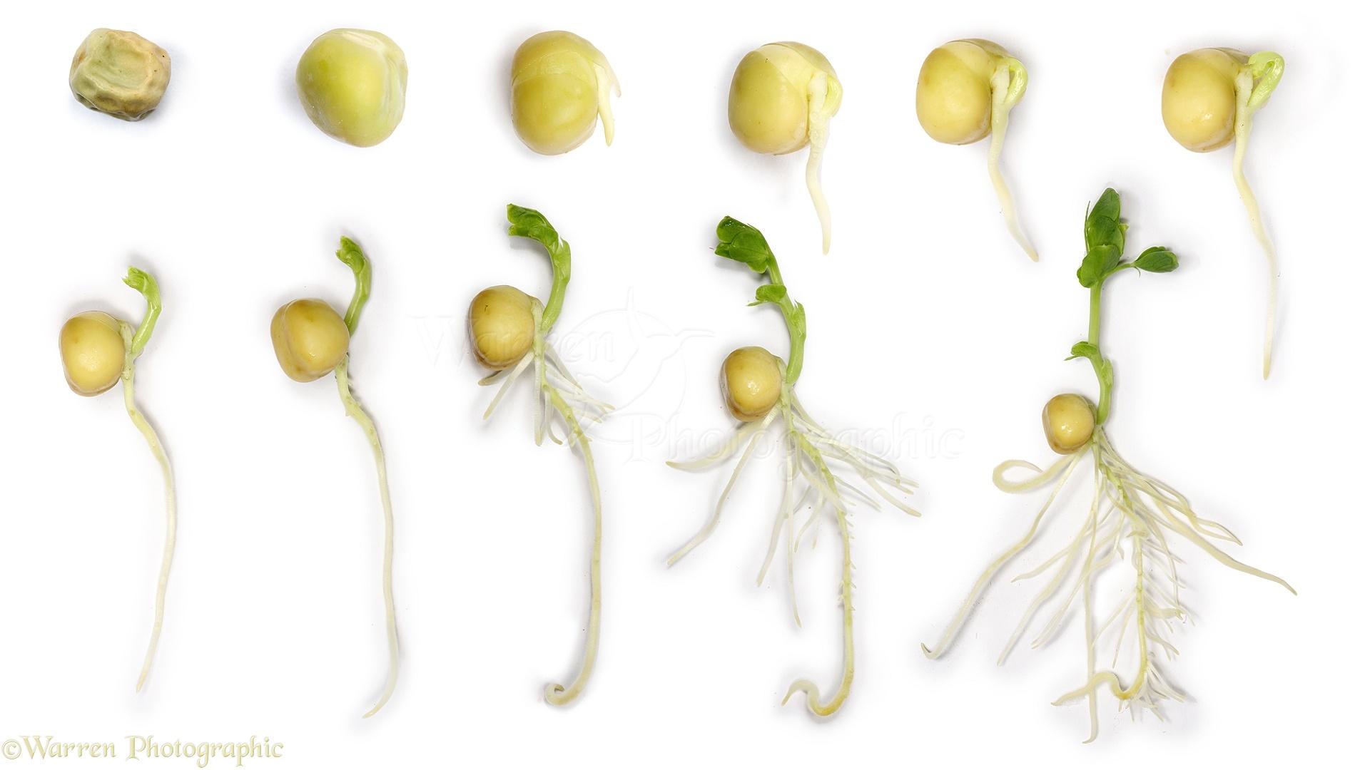 Способы пробудить семена: рецепты от садоводов