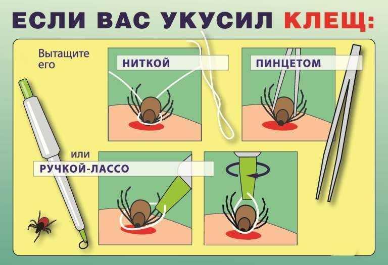 В Кузбассе начинается пик активности клещей