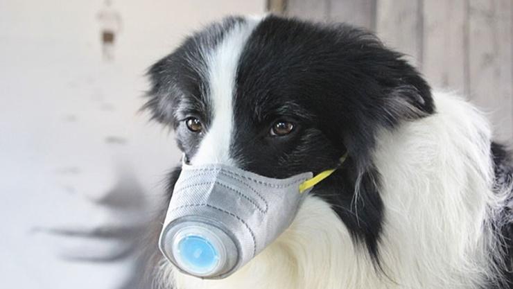 Собаки могут чувствовать коронавирус: исследование биолога