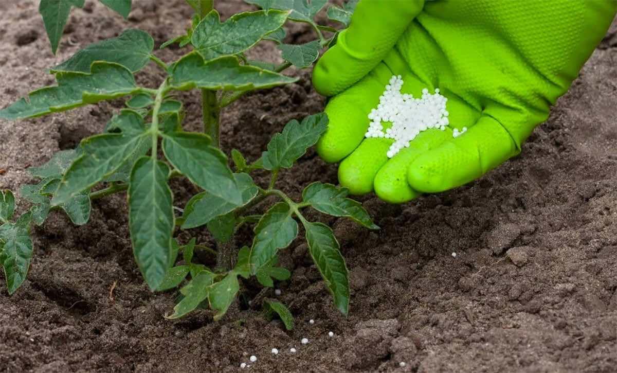 Посадочные работы в огороде и саду в мае 2020 года: благоприятные дни по лунному календарю