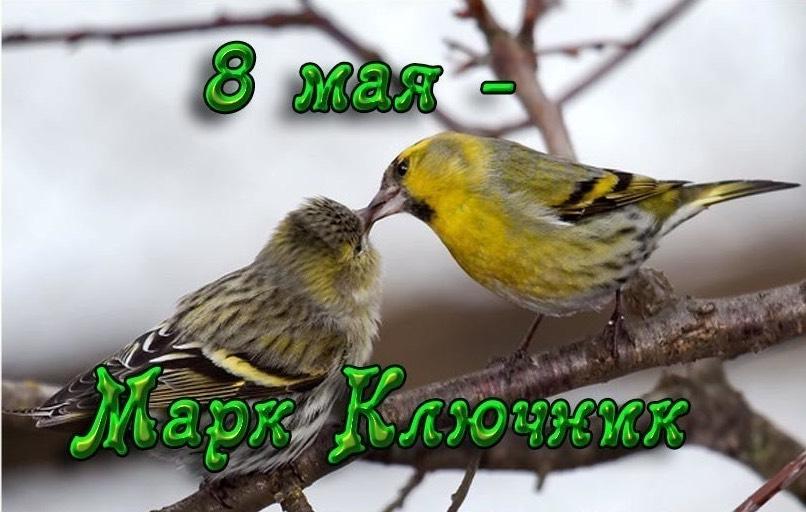 Какой церковный праздник сегодня 8 мая 2020 чтят православные: Марк Ключник отмечают 8.05.2020