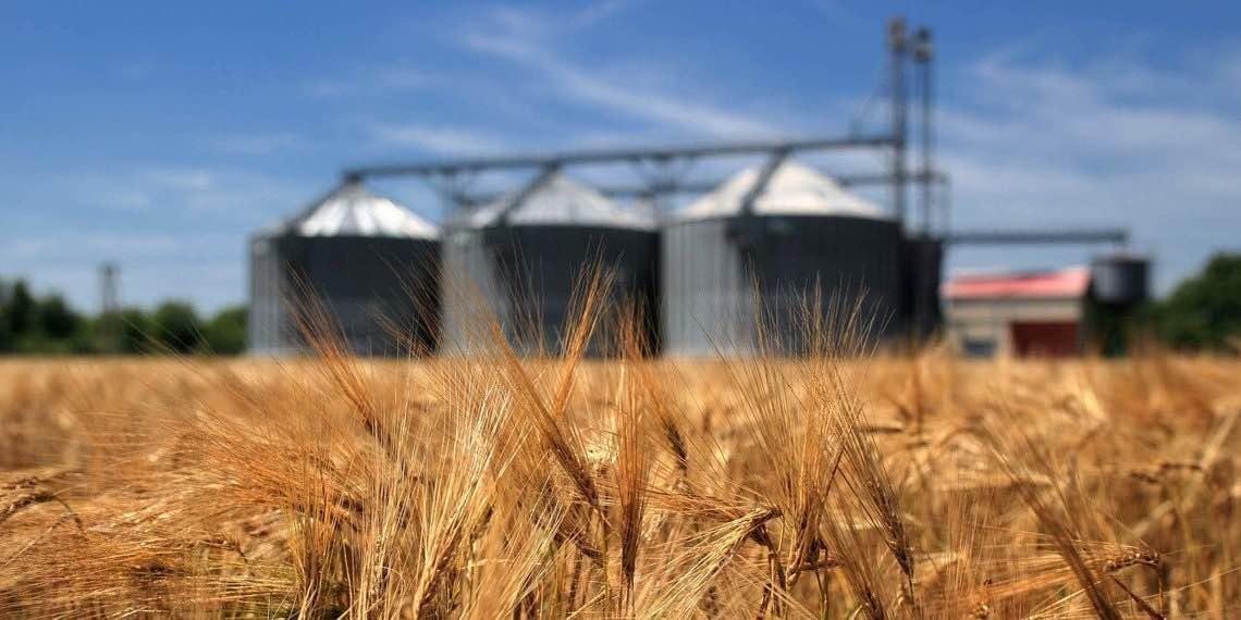Зерновые станут мощным оружием России в экономической мировой войне